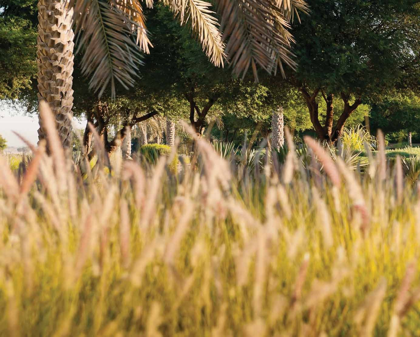 AN IDYLLIC ADDRESS 01/LA AVENIDA 2 ARABIAN RANCHES