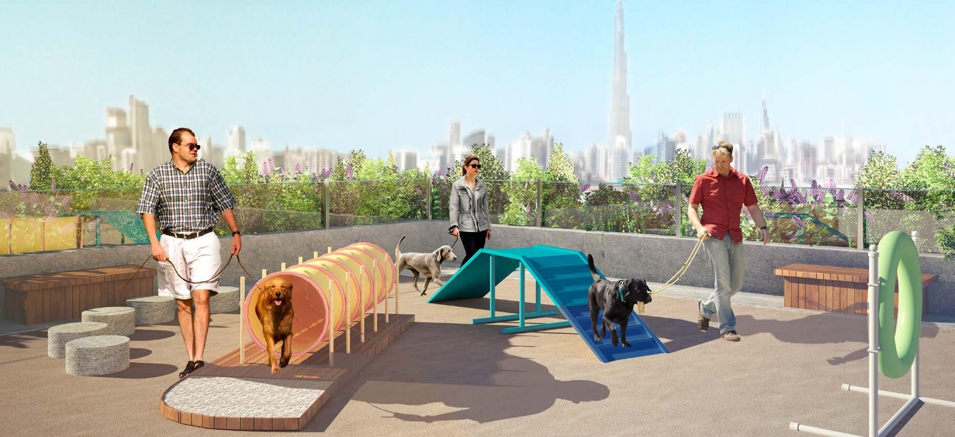 Pets agility area